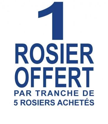 1 rosier offert