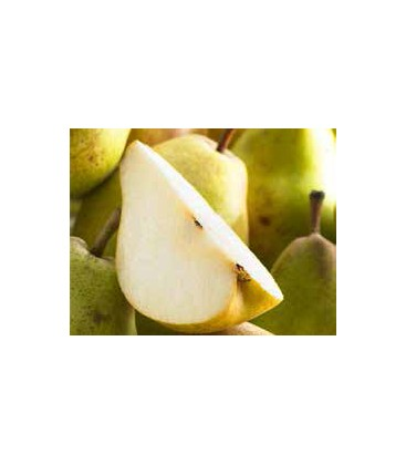 Arbres et arbustes fruitiers