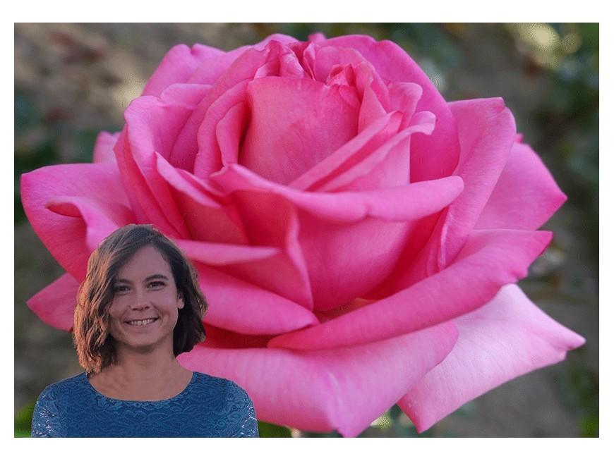 Baptême virtuel de la rose Élise MARC