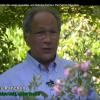 Vidéo du reportage à la pépinière de Patrick Mioulane (2/2)