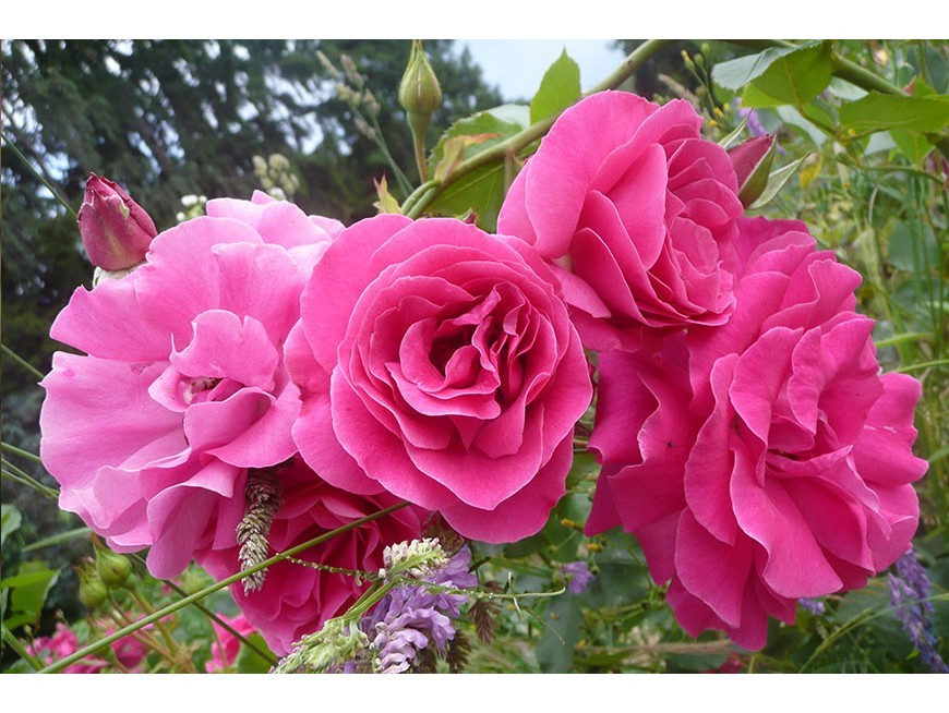 Baptême de la rose Alice BERTHET