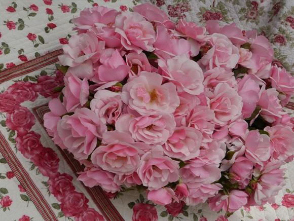 Bénédiction de la rose Notre-Dame de Sereys