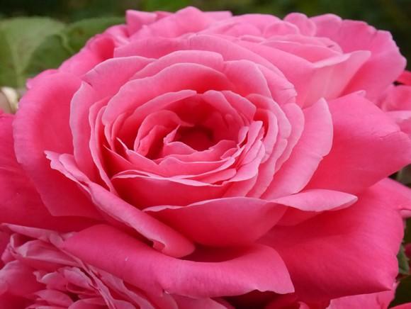 Baptême de la rose Adrien Sénéclauze