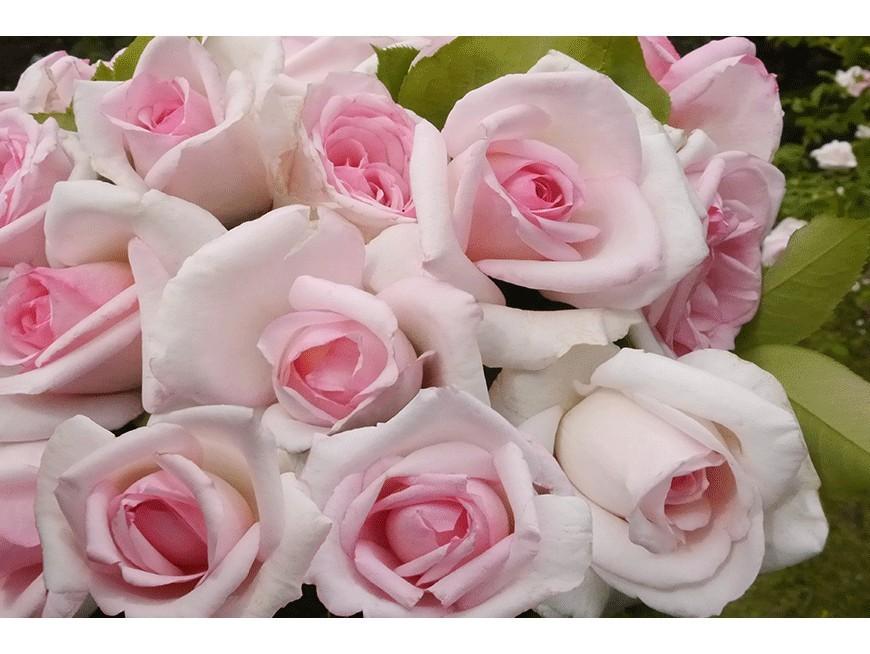 Baptême de la rose Je t'aime