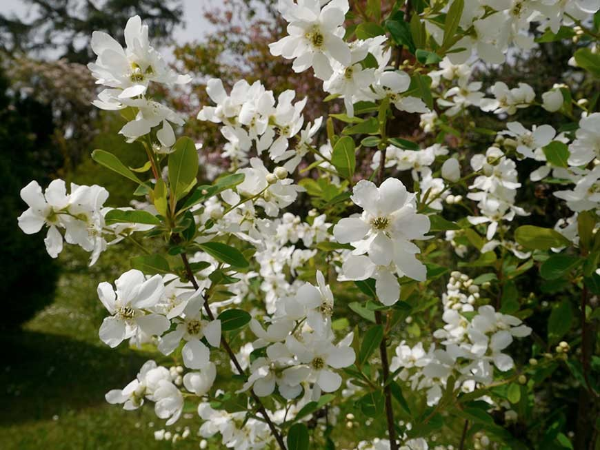 jardin-blanc-05