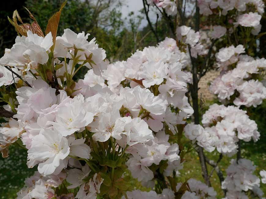 jardin-blanc-06