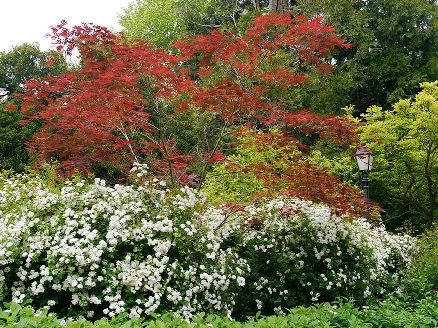 jardin-blanc-07