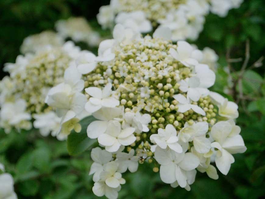 jardin-blanc-08