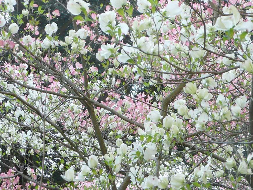jardin-blanc-13