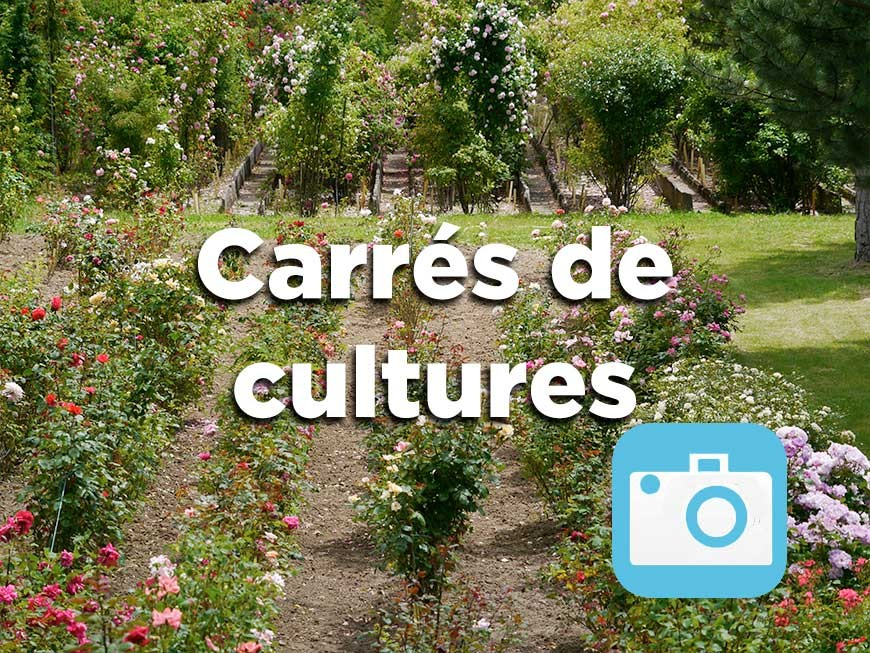 carres-cultures